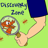 ROY-slider-DiscoveryZone-square