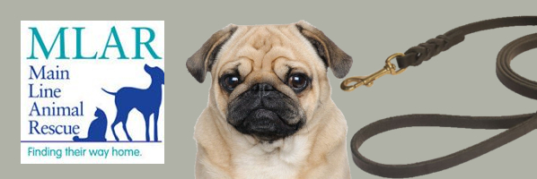 Jellybean the Pug at Story Time - July 31, 10:15 am - PREREGISTER