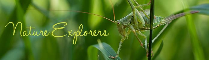 Nature Explorers - Friday, November 11 @ 10:30 @ Victory Park - PREREGISTER