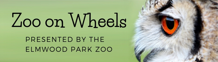Zoo-on-Wheels: Sensational Animals at the Royersford Library