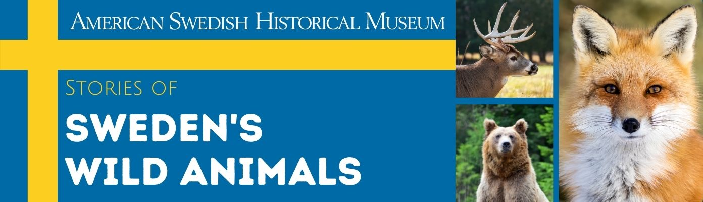 Stories of Sweden's Wild Animals (Virtual), American Swedish Historical Museum